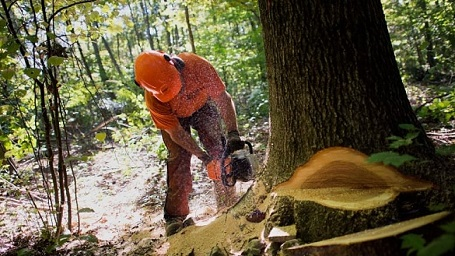 Logging is statistically the most dangerous job in the world
