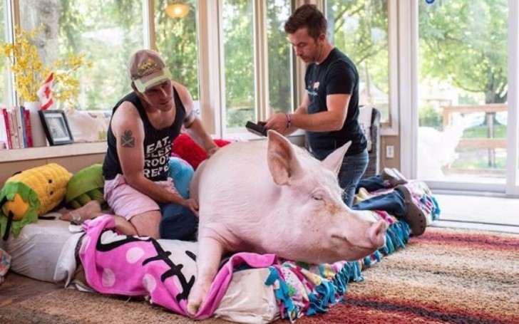 Esther the Wonder Pig getting the Hollywood treatment